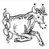 des-touro